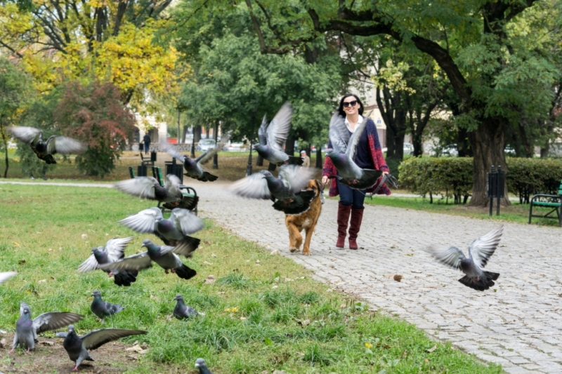edytaandrzejewska.blog 8 spacer z psem