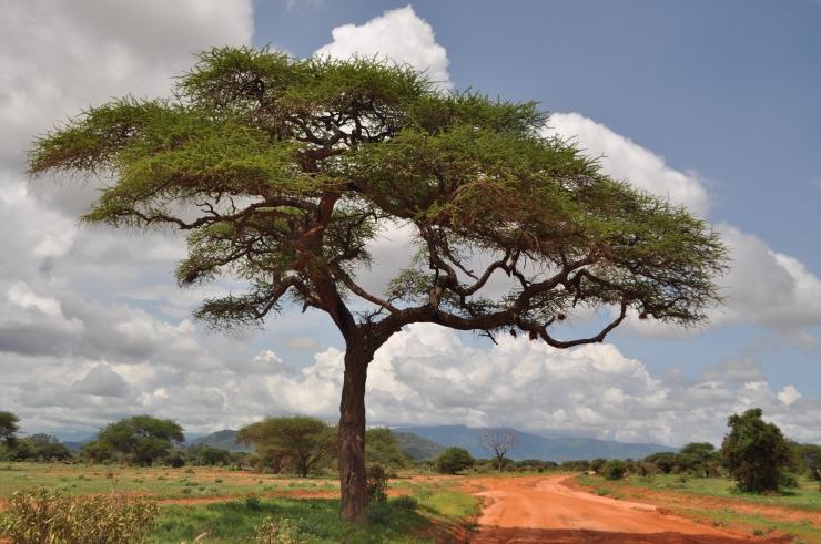 edytaandrzejew3ska.blog Kenia